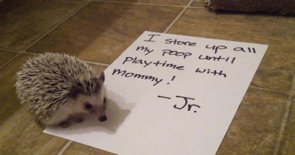 pets-shaming-24