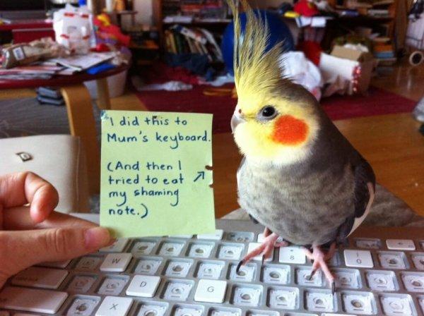 pets-shaming-2