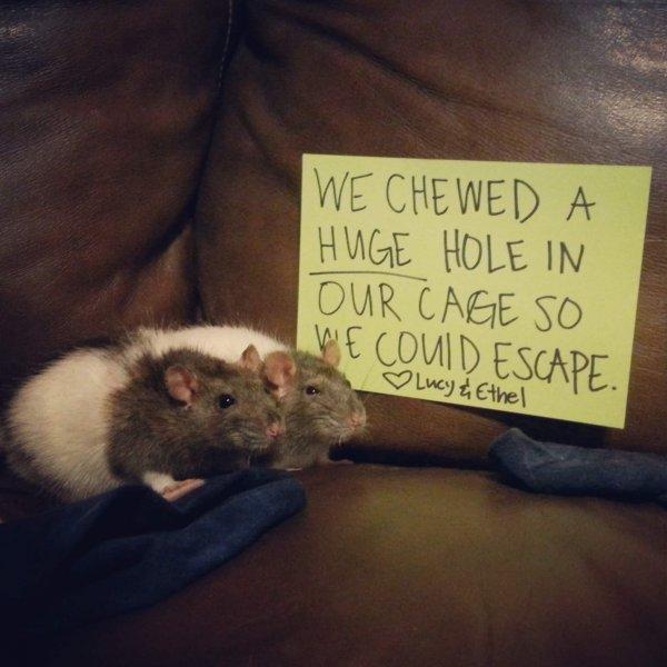 pets-shaming-26